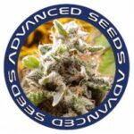 advanced-seeds-feminizadas